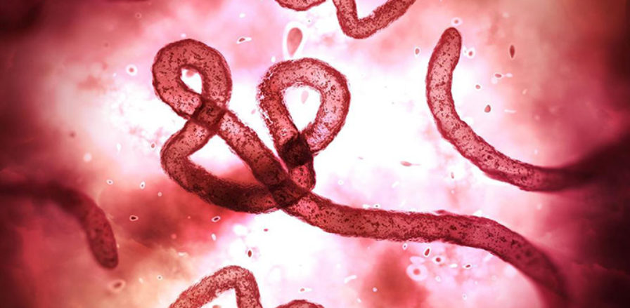 New breakthrough paving the way for universal Ebola therapeutic